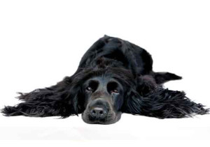 Richardson Veterinarians Black Dog