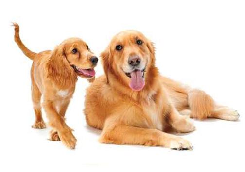 Richardson Veterinarians Dogs