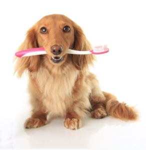 periodontal care for pets
