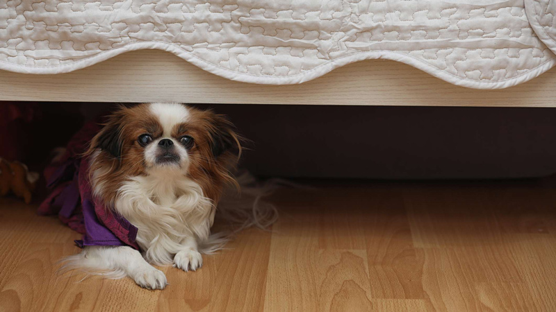 Dog anxiety Richardson veterinarians