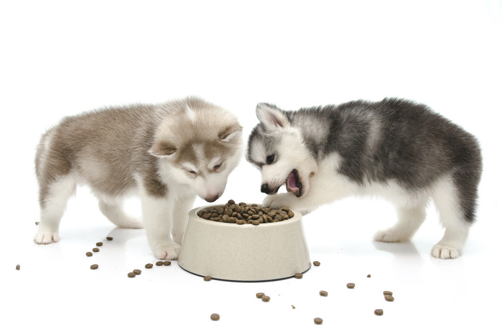 nutrition for puppies and kittens