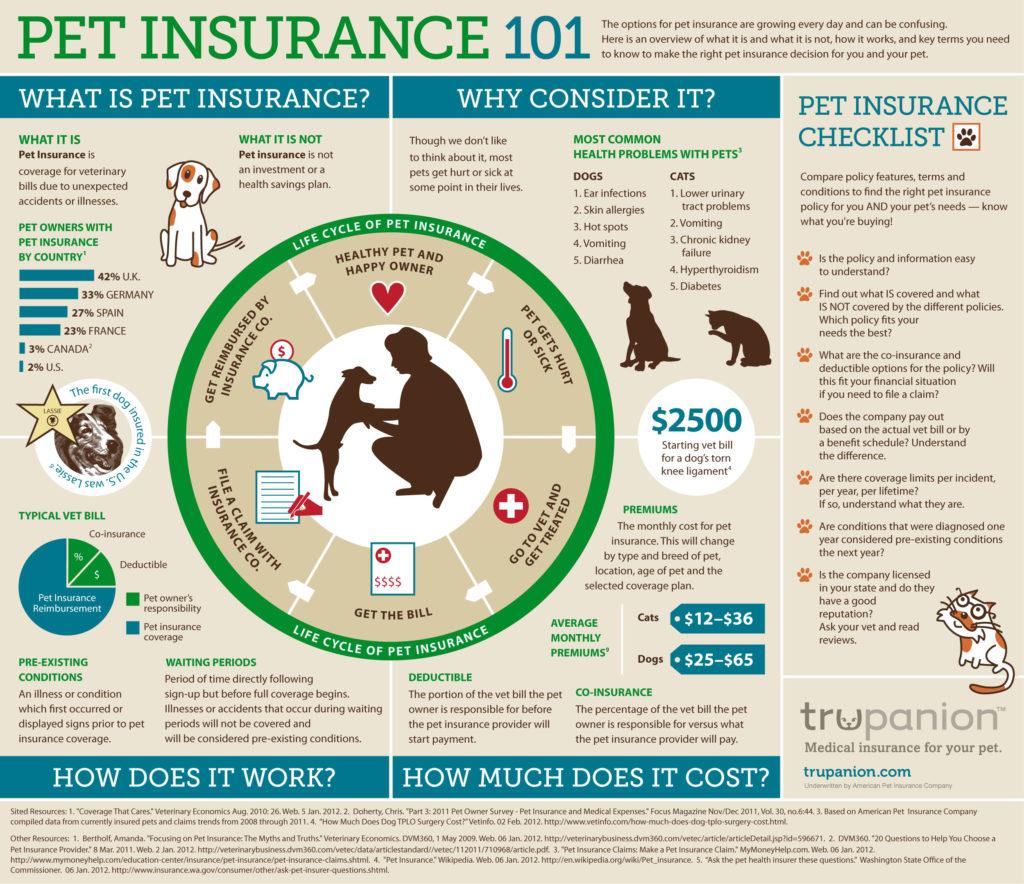 Pet insurance infographic